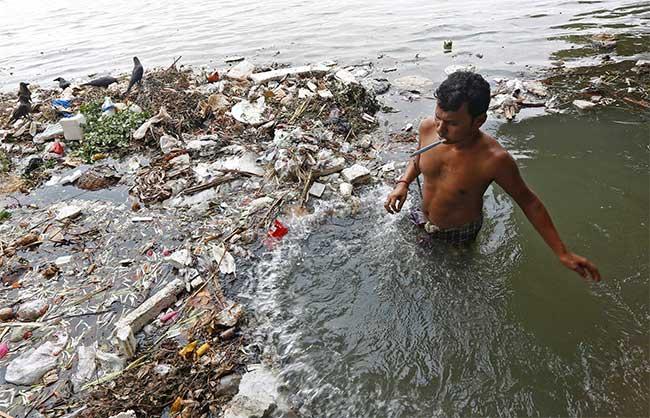 Cá nước ngọt suy giảm nghiêm trọng trên toàn cầu, 1/3 nguy cơ tuyệt chủng