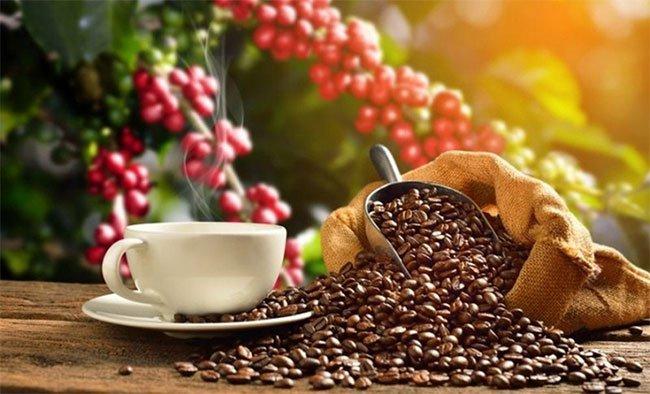 Cà phê tác động đến sức khỏe con người như thế nào?