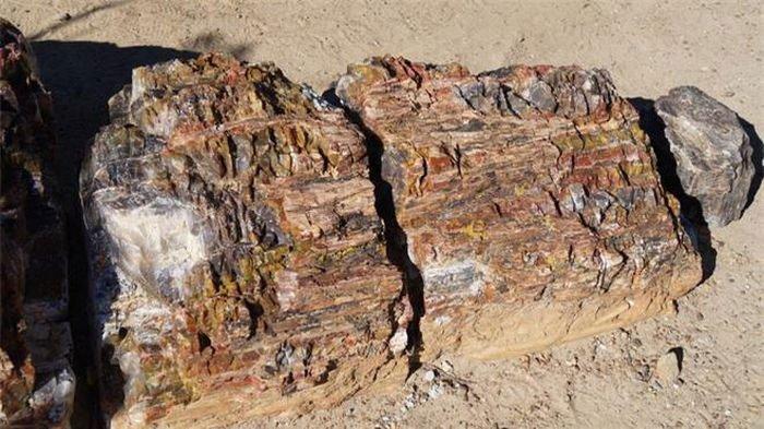 Cả rừng gỗ hóa thạch 200 triệu tuổi lộ diện, chỉ một mảnh khắc tượng Phật cũng trị giá hơn 2 tỷ đồng!