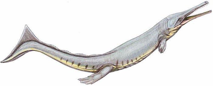Cá sấu cổ đại bắt chước cá voi để thích nghi với cuộc sống ở biển