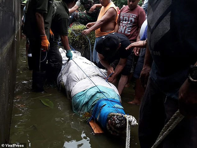 Cá sấu khổng lồ nhảy cao chưa từng thấy đớp người ăn thịt ở Indonesia