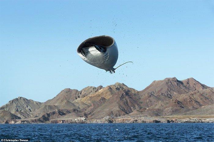 Cá voi khổng lồ qua ống kính của thợ lặn hải quân Hoàng gia Anh
