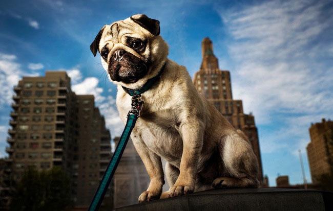 Các boss chó nhìn thấy điều gì khi quan sát con người, bạn có biết không?