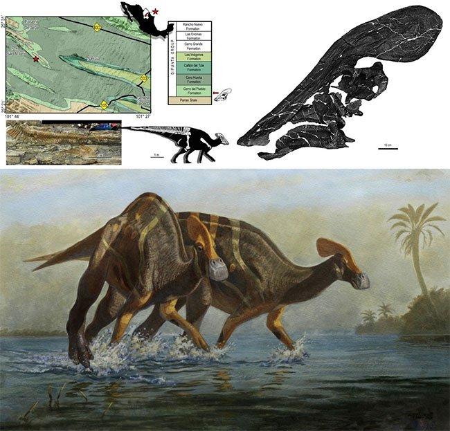 Các nhà cổ sinh vật học Mexico xác định được loài khủng long mới