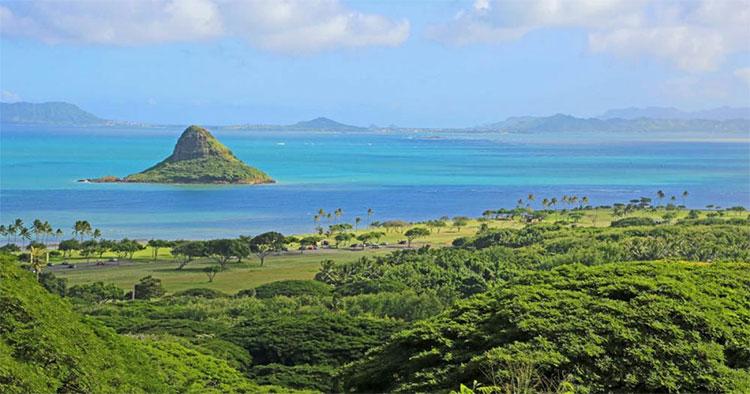 Các nhà khoa học khám phá ra siêu san hô tự phục hồi ở Hawaii