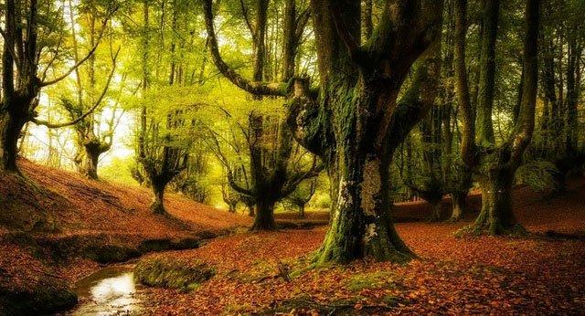 Các nhà khoa học lên kế hoạch tạo ra khu rừng thế hệ mới