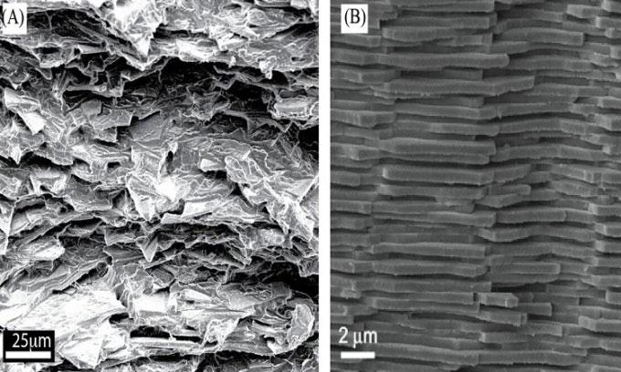 Các nhà khoa học phát triển loại kính không vỡ lấy cảm hứng từ vỏ sò