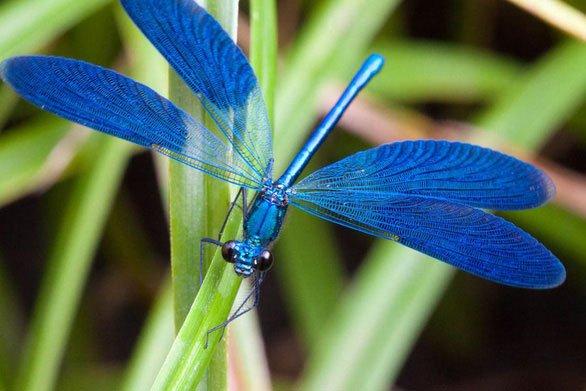 Các nhà khoa học tạo ra màu mới: Màu xanh củ dền
