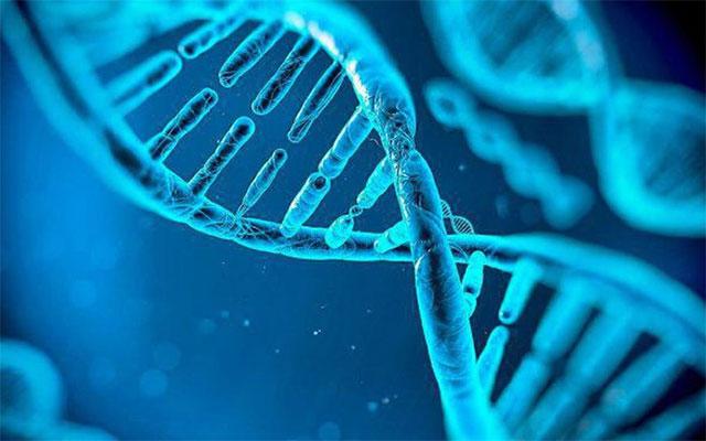 Các nhà khoa học tạo ra một công cụ chỉnh sửa gene mới
