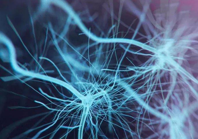 Các nhà khoa học tìm ra được cơ quan mới trong cơ thể người