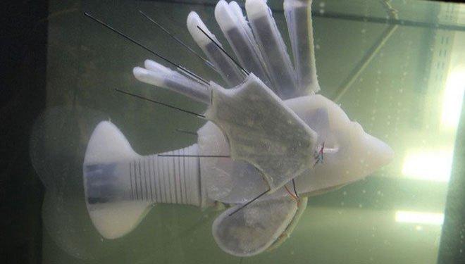 Các nhà khoa học vừa tạo ra robot cá chạy bằng máu