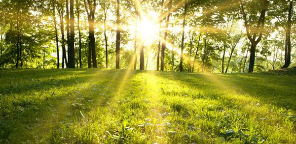 Các nhà tạo ra tấm pin Mặt Trời mới vừa trong suốt, lại vừa tự tạo được cả photon ánh sáng cho mình