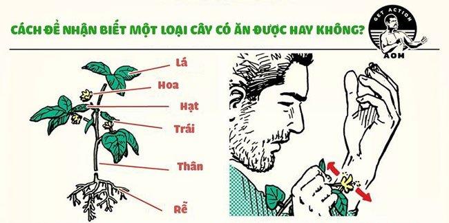 Cách để nhận biết đâu là loại cây có thể ăn được