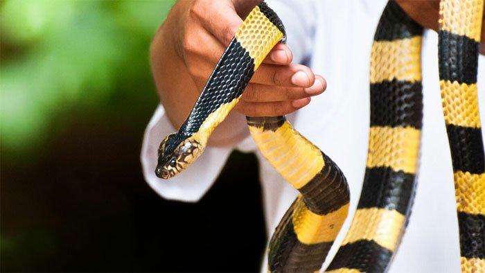 Cách đối phó khi rắn độc bò vào nhà sau lũ