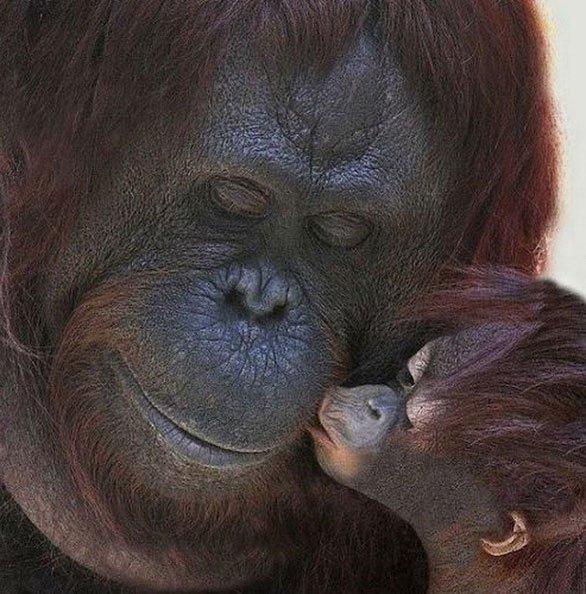 Cách nuôi con độc đáo của các bà mẹ động vật