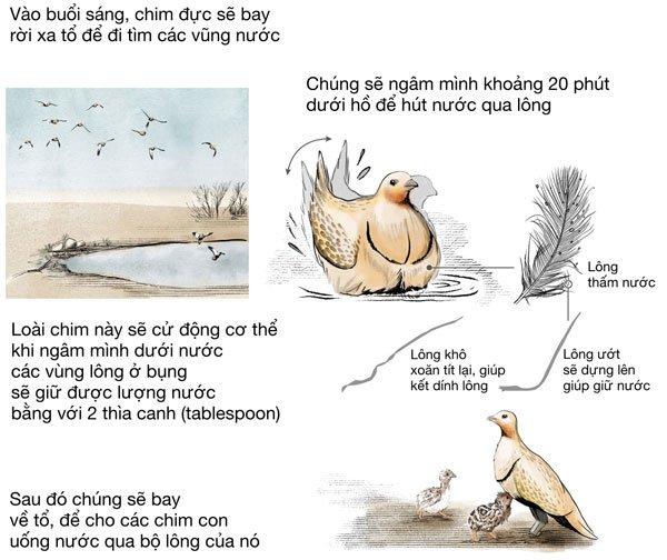Cách uống và giữ nước cực thú vị của những loài động vật sống ở vùng khô hạn