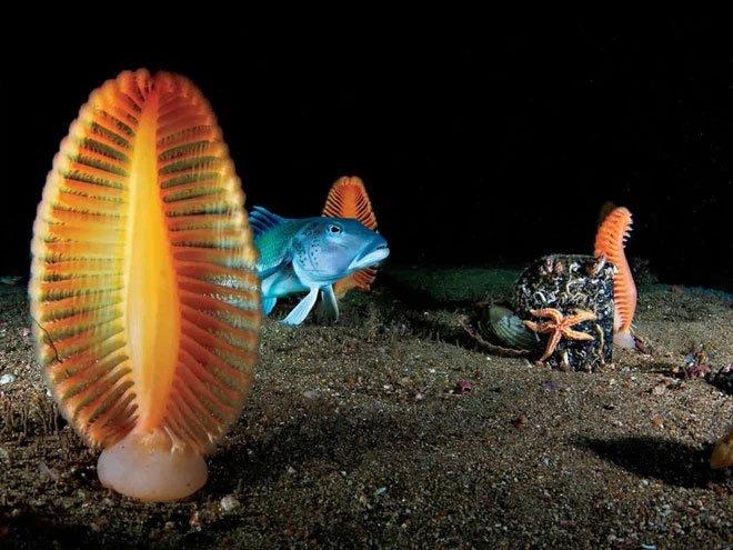 Cần gì lên sao Hỏa cho xa, ngay ở Trái đất cũng có 50 loài quái vật ngoài hành tinh này đây (Phần 2)