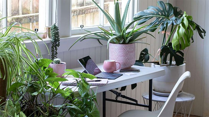 Cần trồng 100 cây xanh/m2 sàn mới có thể làm sạch không khí trong nhà