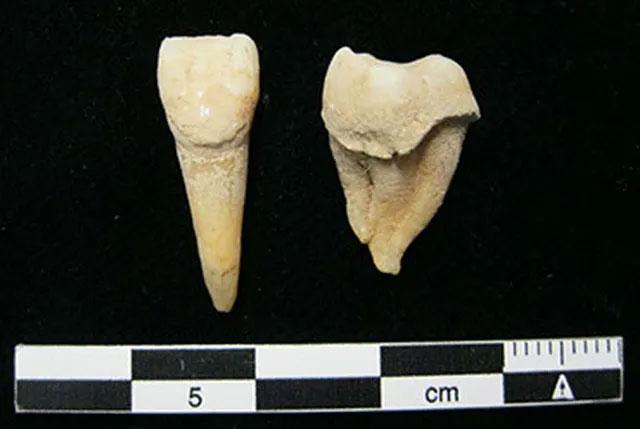 Cao răng cổ đại cho thấy người mông cổ đã biết sử dụng sữa từ 3.000 năm trước