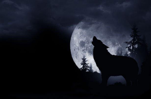 Câu chuyện kỳ quái về người chó ám ảnh một người đàn ông cả cuộc đời