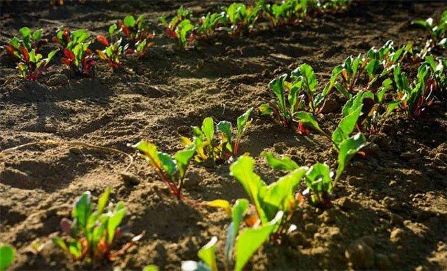 Cây cối có thể gửi tín hiệu ngầm dưới đất