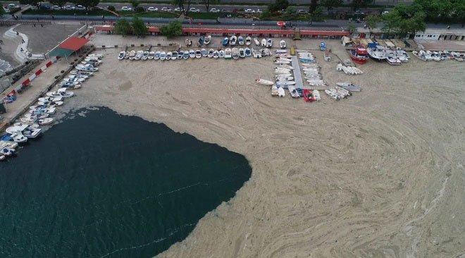 Chất nhầy bất thường bao phủ bờ biển Istanbul