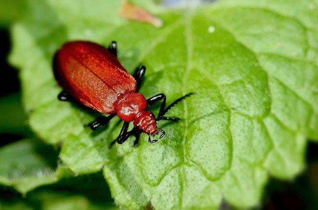 Chất thải kỳ dị của côn trùng, không ngờ là gia tài