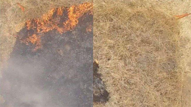 Chế tạo thành công gel có thể ngăn chặn cháy rừng