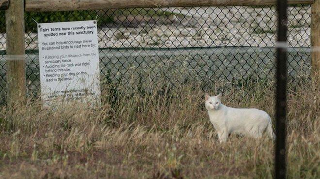 Chỉ một con mèo thiến đơn độc cũng có thể thảm sát toàn bộ hệ sinh thái