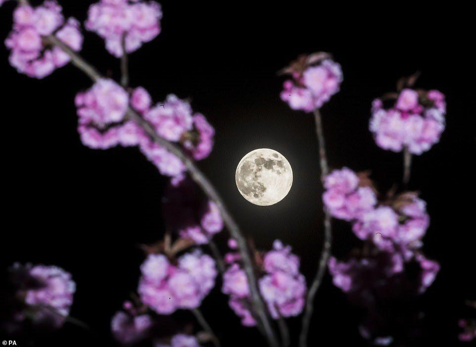 Chiêm ngưỡng Trăng hồng kỳ thú ở khắp nơi trên thế giới