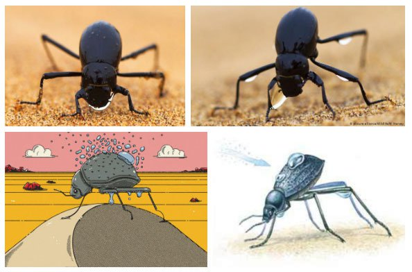 Chiến thuật sinh tồn tuyệt vời của loài bọ sống tại một trong những sa mạc khô nhất thế giới