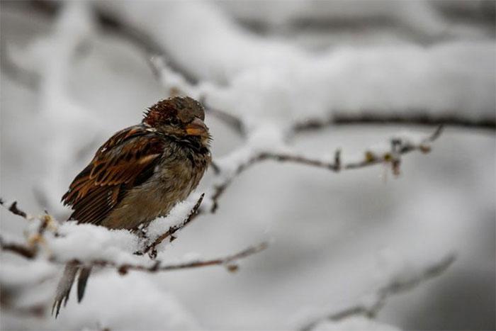 Chim ở Bắc Mỹ nhỏ dần đi vì biến đổi khí hậu