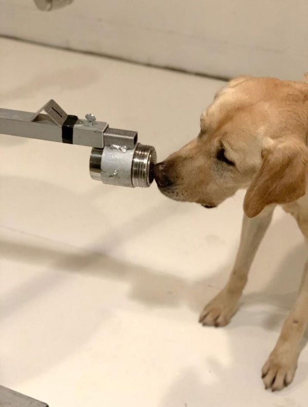 """Chó có thể nhận biết """"mùi virus từ nước tiểu"""