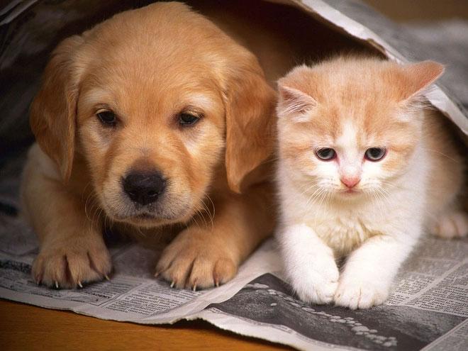 Chó, mèo có thể lây Covid-19 sang người không?