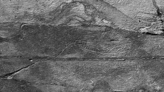 Choáng váng đàn quái vật 570 triệu tuổi không nội tạng, nối mạng bằng tơ