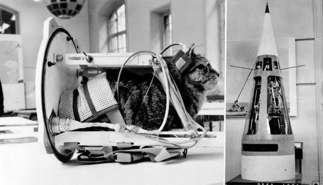 Chú mèo đầu tiên bay vào vũ trụ