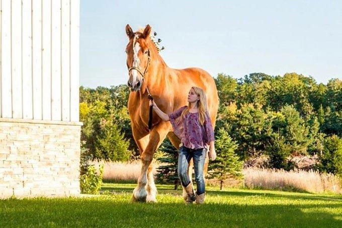 Chú ngựa cao nhất thế giới chết ở tuổi 20