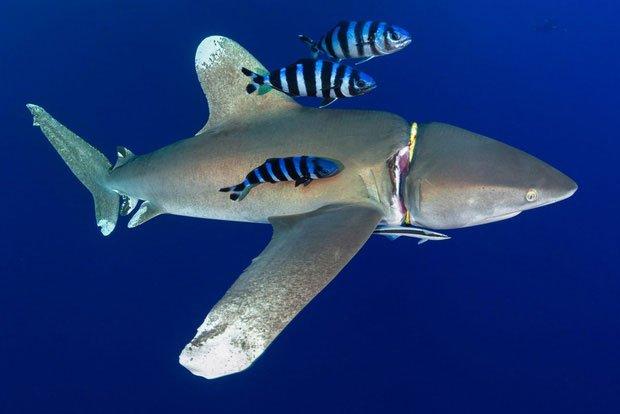 Chùm ảnh cho thấy bi kịch dưới đại dương đang trở nên đáng sợ đến mức nào