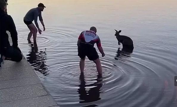 Chuột túi nắm tay cảm ơn người đã cứu sống, giúp nó thoát khỏi tử thần