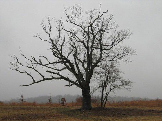 Chuyện về cây quỷ: Chứng kiến vụ thảm sát 1 gia đình và nhiều cái chết khác