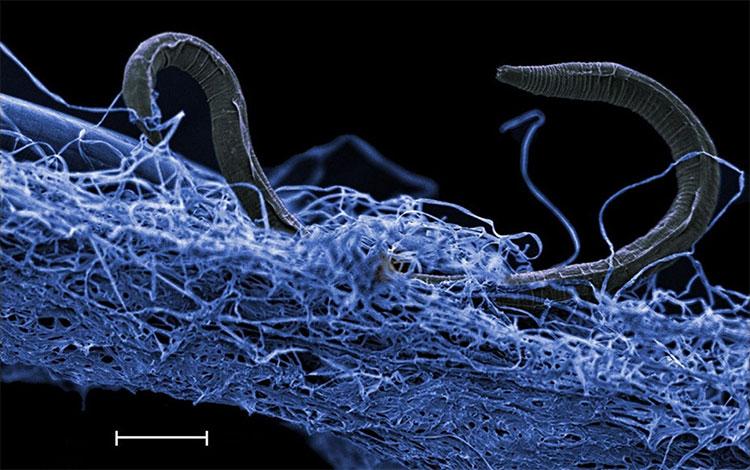 Có tới 15-23 tỉ tấn vi sinh vật dưới mặt đất