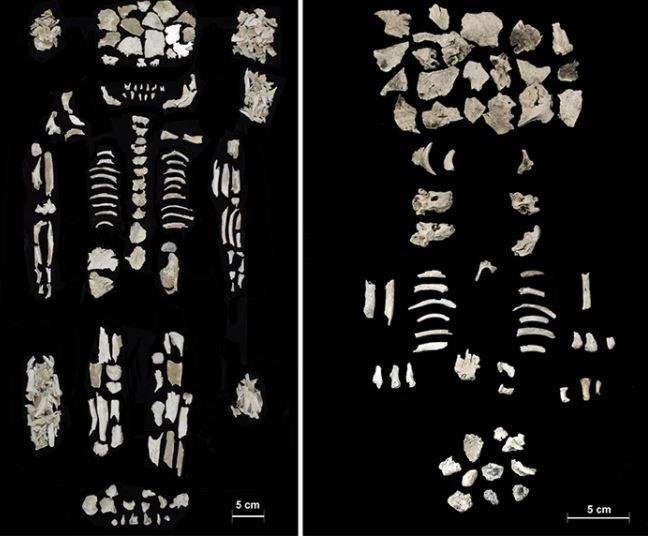 Cổ vật 4.000 năm tuổi tiết lộ câu chuyện về một người phụ nữ mang thai song sinh