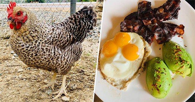 Con gà may mắn nhất thế giới đẻ ra trứng 3 lòng đỏ