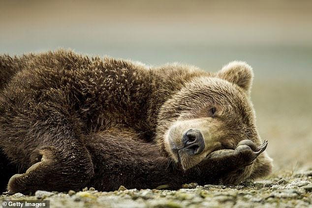 Con người có thể ngủ đông như gấu, khi cần sẽ hồi sinh?