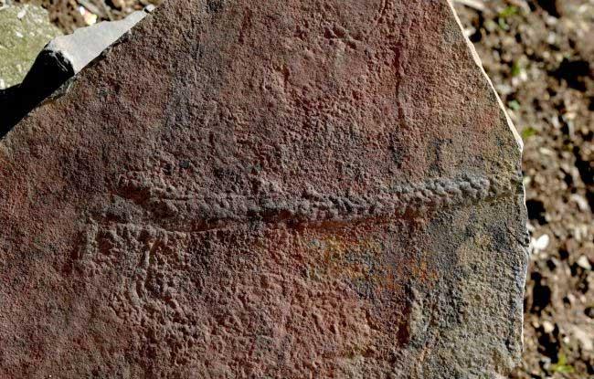 Con vật với 50 phần cơ thể sống cách đây 550 triệu năm có thể giải mã bí mật sự sống