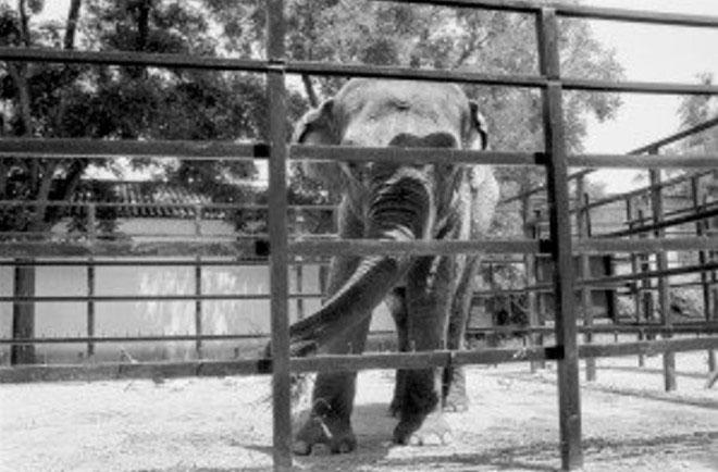 Con voi buồn nhất thế giới qua đời sau 43 năm bị biệt giam