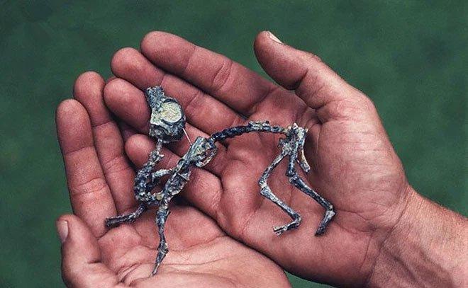 Cứ tưởng khám phá ra loài khủng long tí hon, ai ngờ rằng khi trưởng thành chúng lại nặng cả tấn