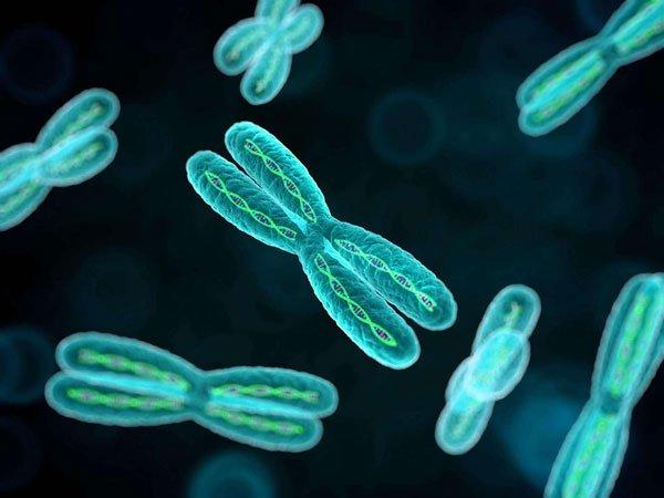 Cuối cùng thì các nhà khoa học cũng đã giải mã thành công toàn bộ bộ gen của con người