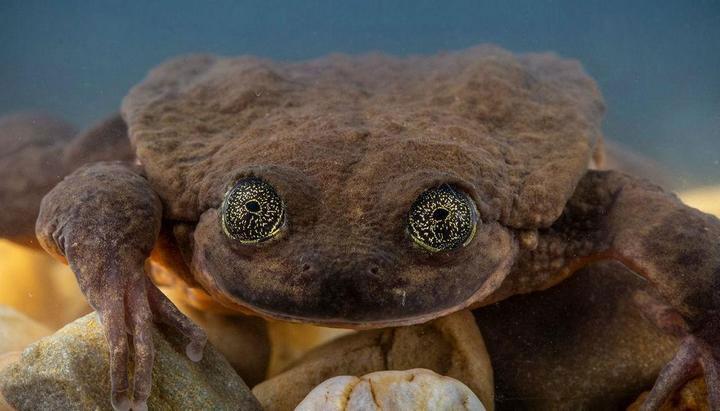 Cuối cùng thì chú ếch cô đơn nhất thế giới đã tìm được bạn gái