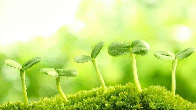 Đã có siêu thực phẩm có thể cứu đói cả nhân loại: Tất cả chỉ nhờ loại thực vật nhỏ bé này!